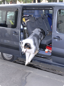 chienVoiture