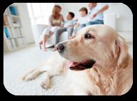 chien famille salon