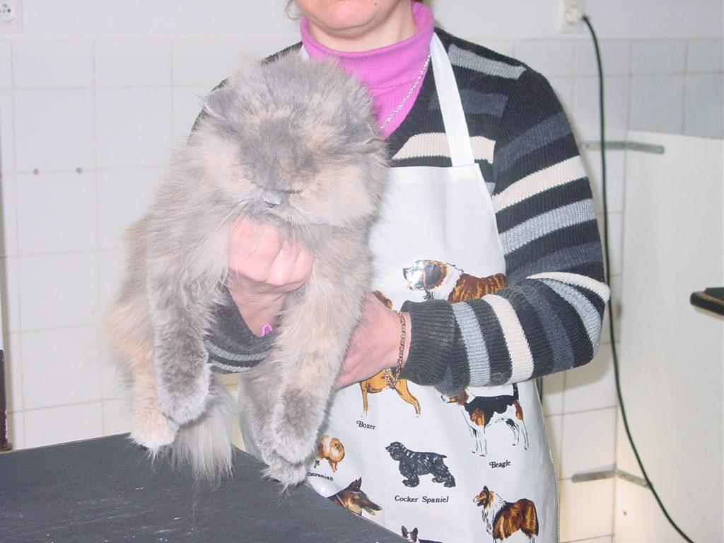Toilettage chat : vous devez au minimum avoir une sérieuse information sur le sujet!