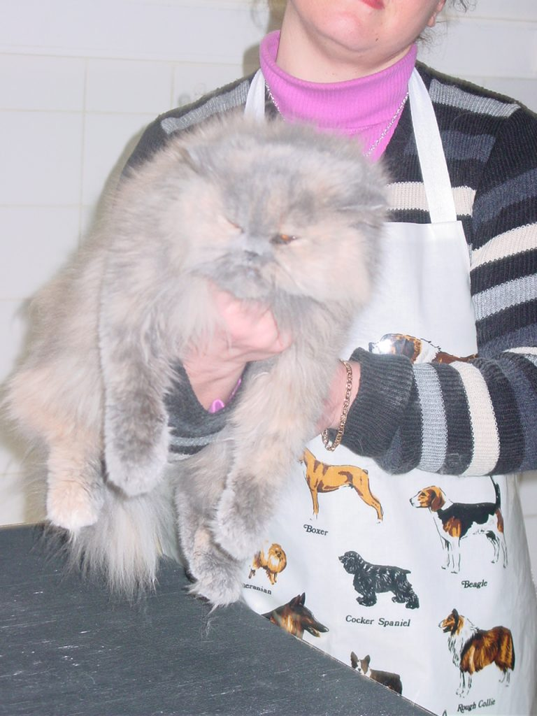 Toilettage chat : chatons baignés avant leurs trois mois...