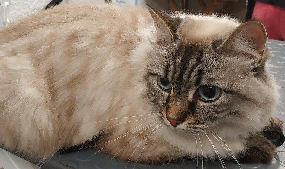La peau des chats est très fine et très fragile.