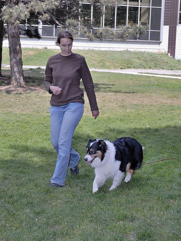 Formation éducateur canin : un enrichissement personnel
