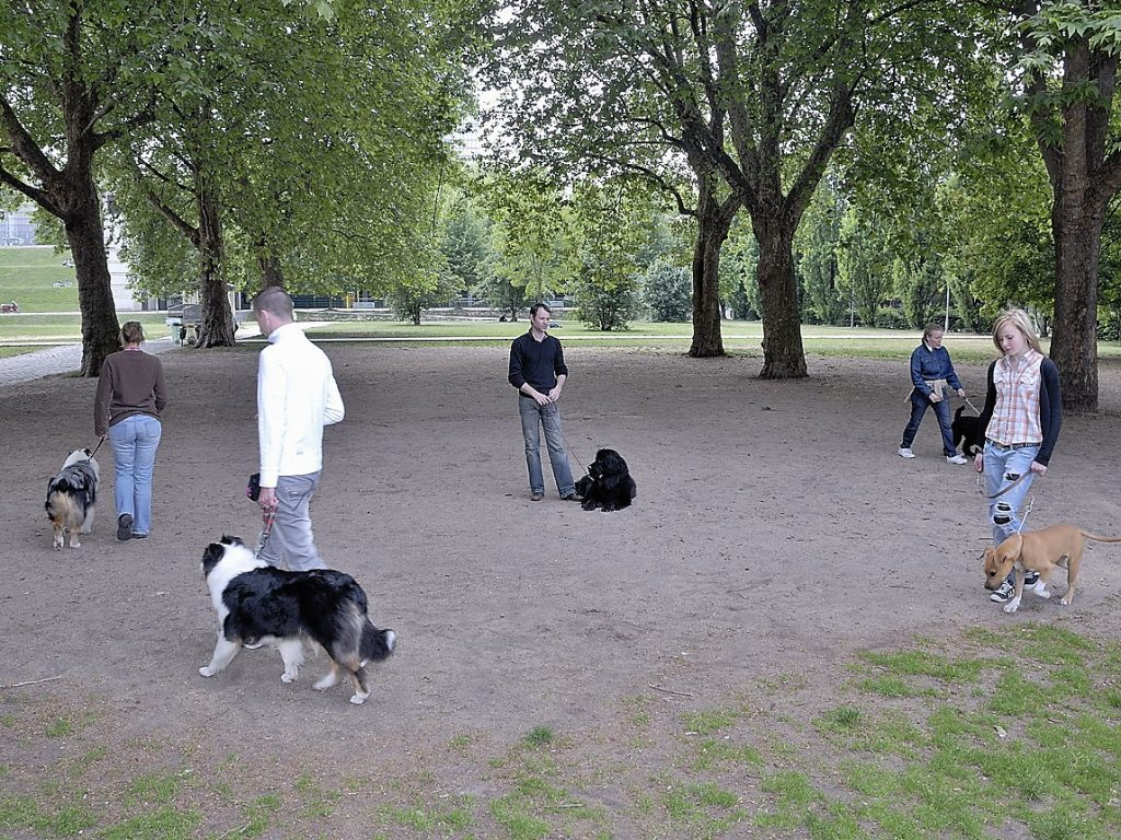 Formation éducateur canin : préférez des stages chez des professionnels différents !