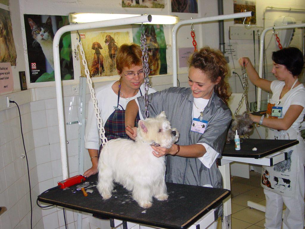 Toilettage chien, toilettage chat : La pratique du toilettage professionnel implique certaines qualités…